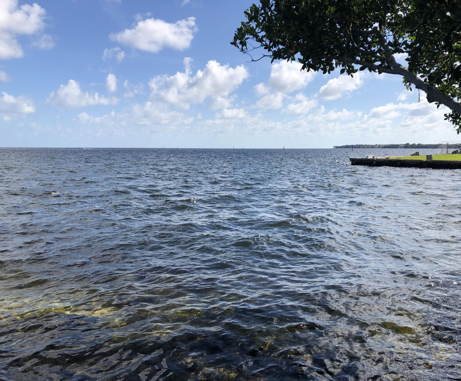 Though invisible when you look out on the bay, Biscayne Bay is a place of carnage beneath the surface.